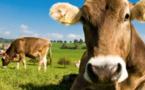Chasse, élevage et végétarisme en islam ;  des paradigmes  en concurrence