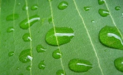 Perspective éthique appliquée à l'Islam concernant l'environnement