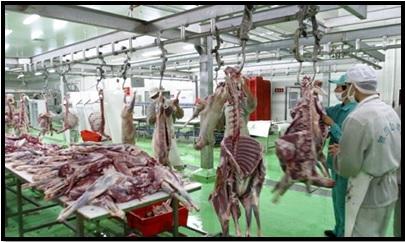 Abattoir halal du Parc industriel de produits alimentaires halal de Wuzhong. Xinhuanet.com